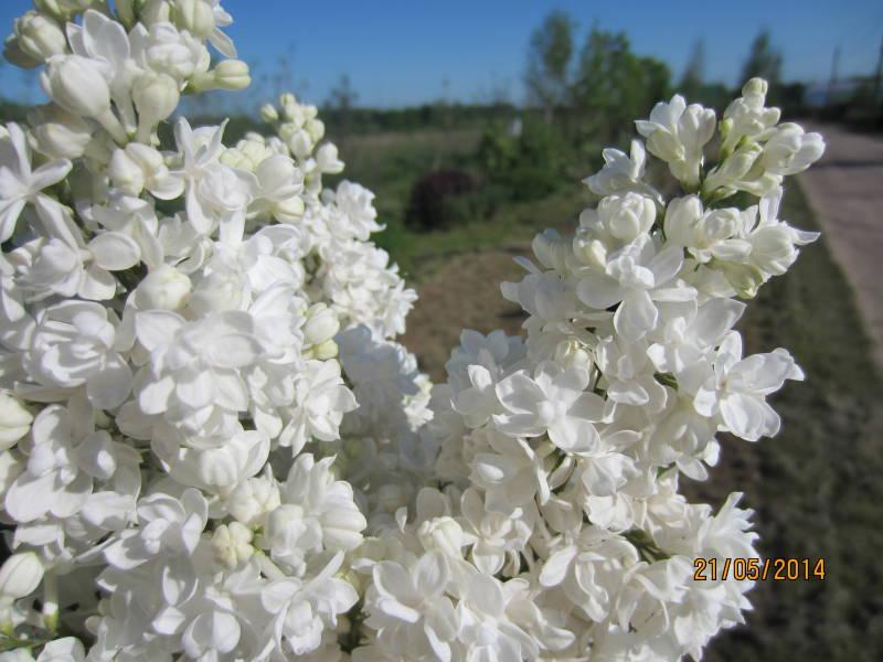 О питомнике декоративных растений